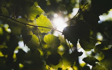 tree leaves with a kiss of sun